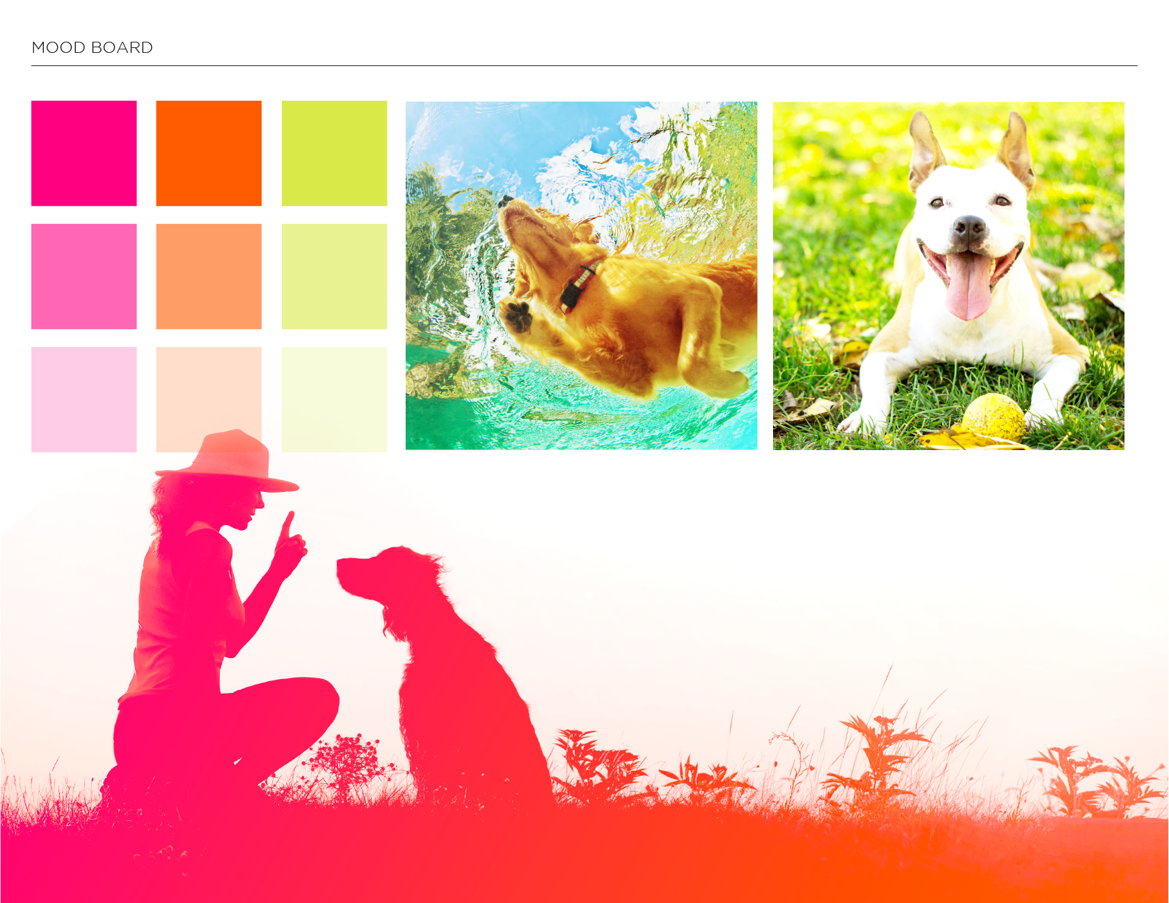 Bow Wow Branding colour palette and dog photos